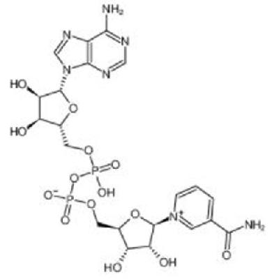 BETA-Nicotinamide adenine dinucleotide